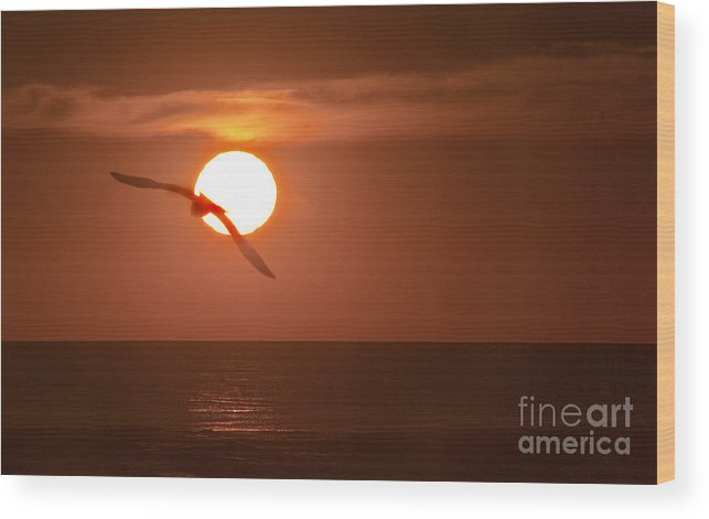 Gull Wood Print featuring the photograph Sunset Gull No.1 by Scott Evers
