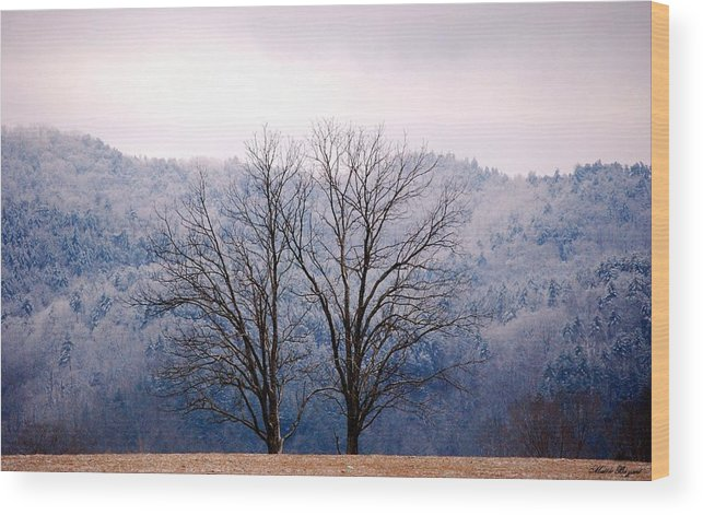 Trees Wood Print featuring the photograph Twin Sisters by Mattie Bryant