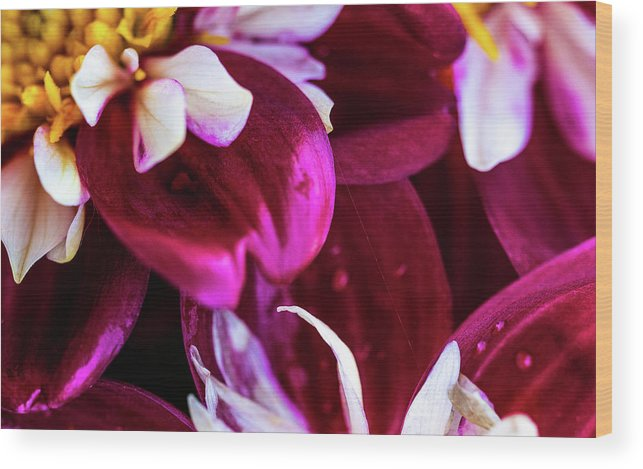 Closeup Wood Print featuring the photograph One Strand by Onyonet Photo Studios