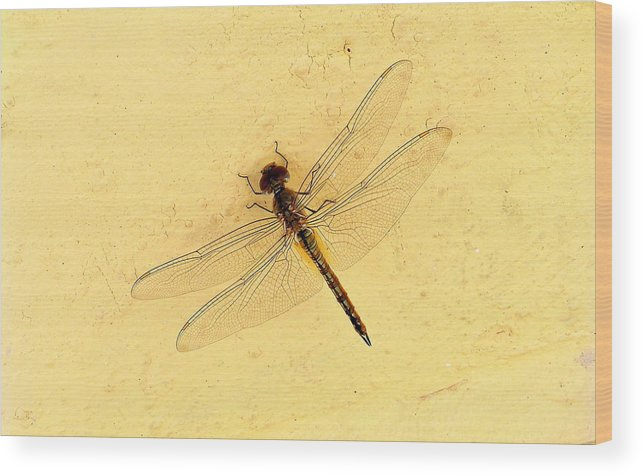 Dragonfly Wood Print featuring the photograph Dragonfly On Yellow Wall by Paul Williams