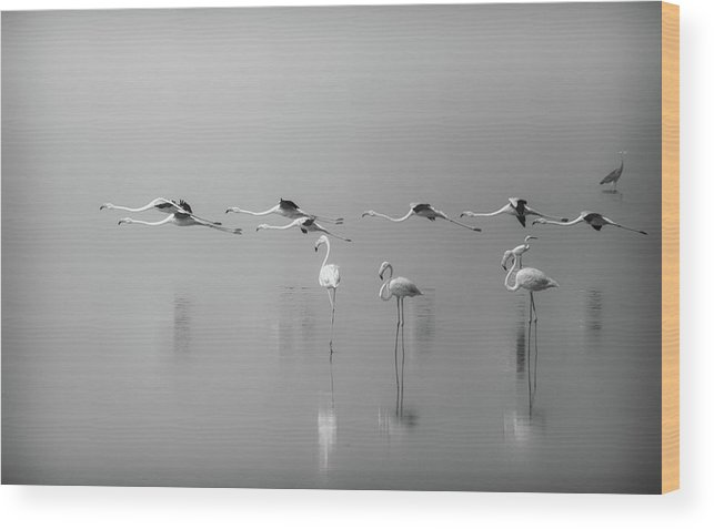 Kuwait Wood Print featuring the photograph At A Glance by Ahmed Thabet