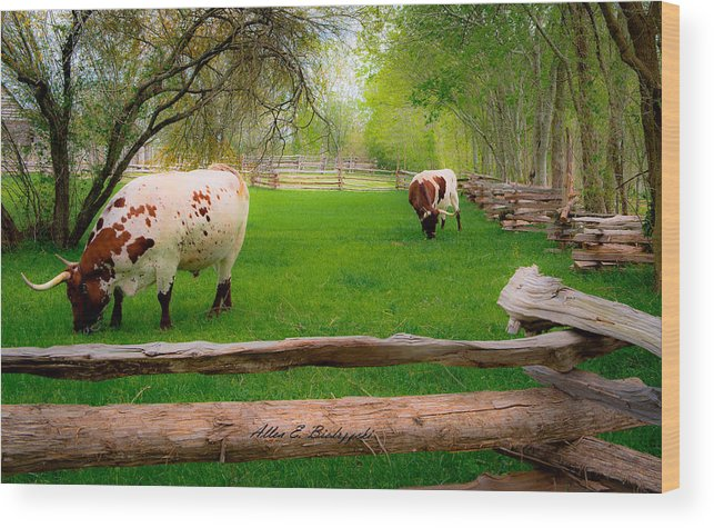 Cows Wood Print featuring the photograph Barrington Farm Bovine by Allen Biedrzycki