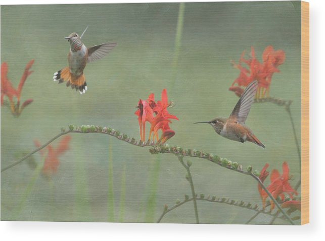 Hummingbird Wood Print featuring the photograph Dancing In The Flowers by Angie Vogel