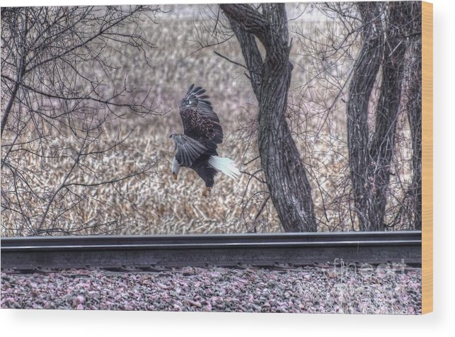 Eagle Wood Print featuring the photograph Eagle Landing 2 by M Dale