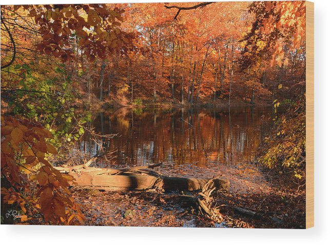 Rhode Island Wood Print featuring the photograph End Of Path by Lourry Legarde