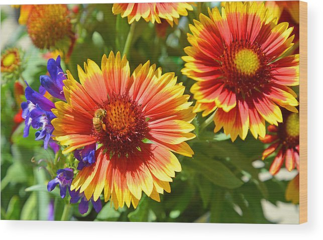 Garden Wood Print featuring the photograph Nature's Friends by Lynn Bauer
