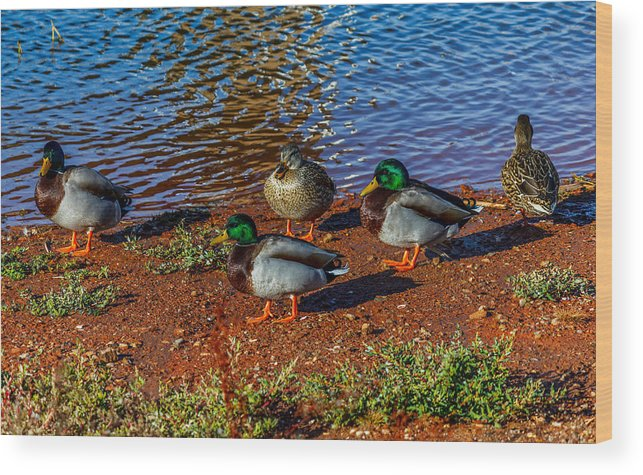 Ducks Wood Print featuring the photograph On The Shore by Doug Long
