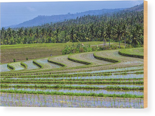 Wave Pattern Wood Print featuring the photograph Rice Fields, Bali, Indonesia by Konstantin Trubavin