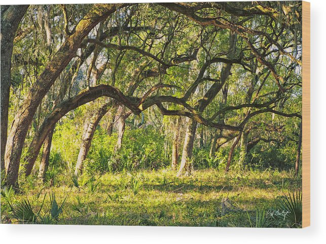 Beaufort County Wood Print featuring the photograph Bent Trees by Phill Doherty