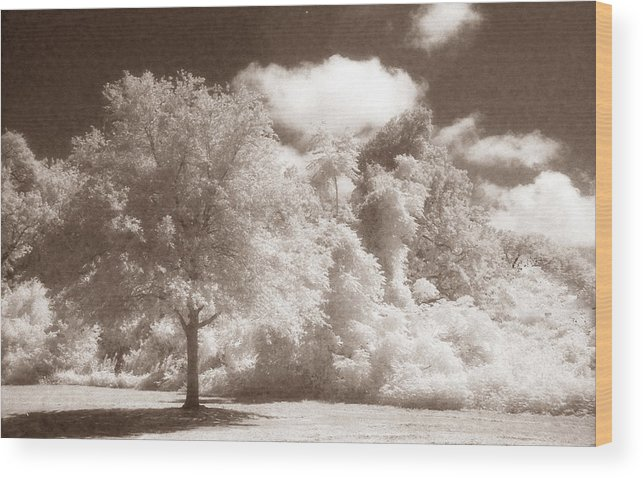 Landscape Wood Print featuring the photograph Park Place by Jean Wolfrum