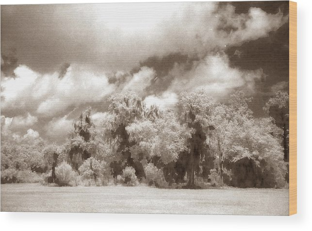 Landscape Wood Print featuring the photograph Forest Land by Jean Wolfrum