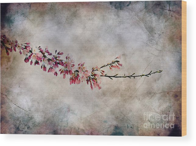 Spring Wood Print featuring the photograph Blossom Branch by Elaine Manley