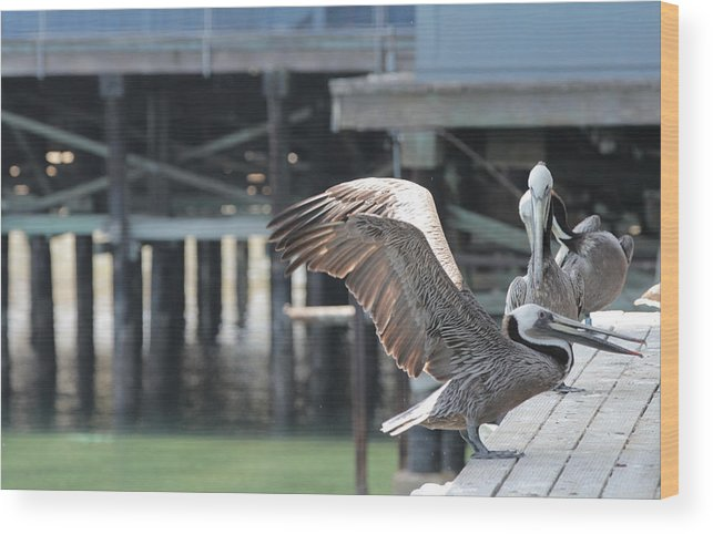 Pelican Wood Print featuring the photograph California Brown Pelicans 2 by Sakari Kouti