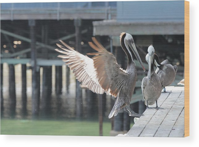 Pelican Wood Print featuring the photograph California Brown Pelicans by Sakari Kouti