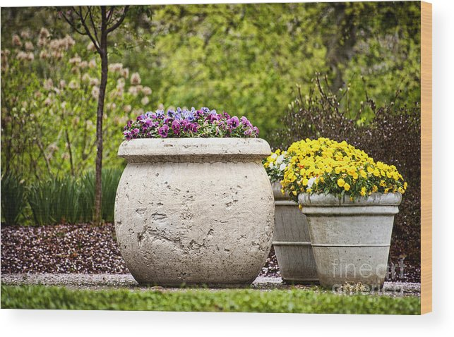 Flowers Wood Print featuring the photograph Pots Of Pansies by Cheryl Davis