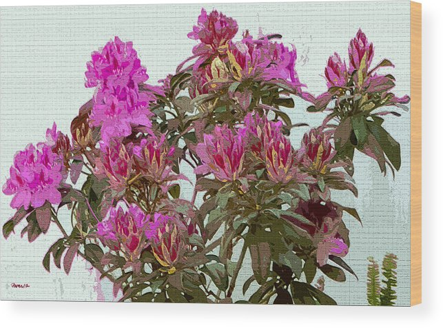 Flowers Monterey California Red Pink Pavelle Fine Art Wood Print featuring the digital art Red And Pink by Jim Pavelle