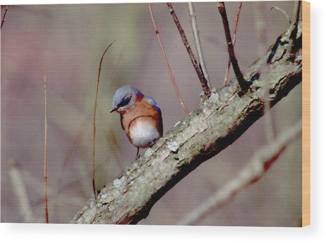 Bluebird Wood Print featuring the photograph 070506-18 by Mike Davis