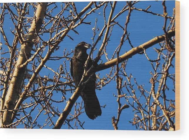Raven Wood Print featuring the photograph Raven by Marilynne Bull