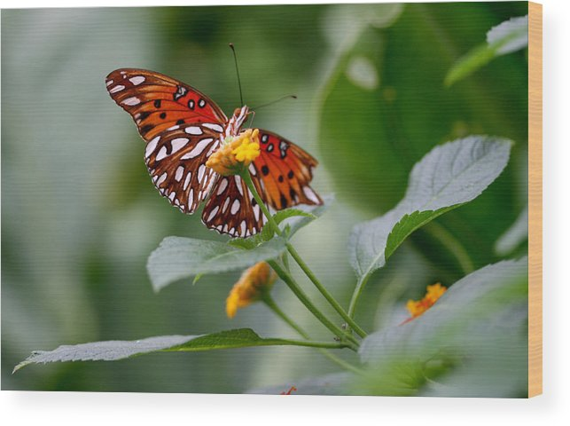Butterfly Wood Print featuring the photograph Butterfly by Jason Hochman