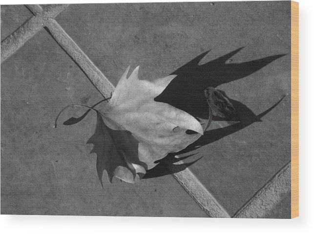 Fallen Leaf Wood Print featuring the photograph Fallen Leaf by Yavor Kanchev