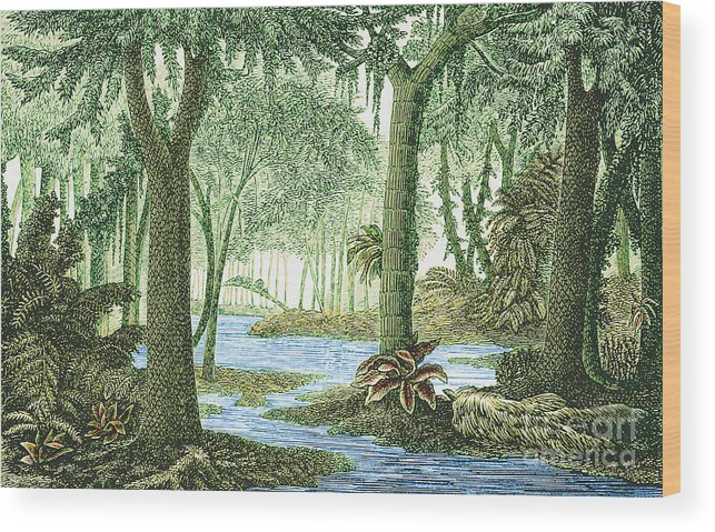 Prehistoric Flora Carboniferous Period Wood Print By Science Source