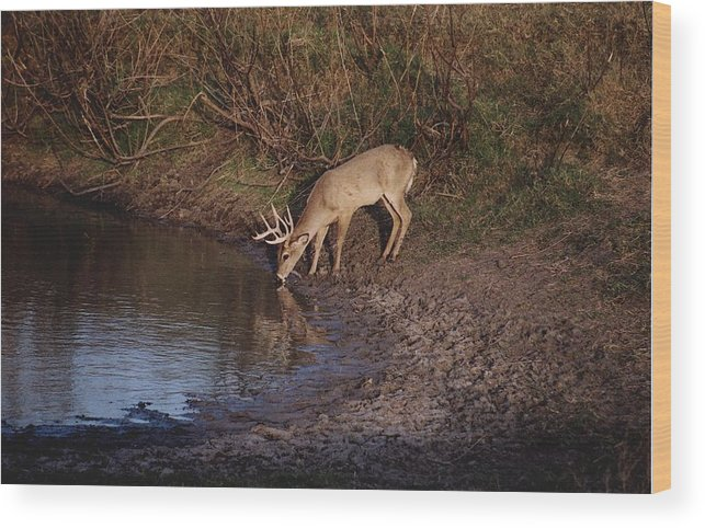 Deer Wood Print featuring the photograph Private Ranch 5 by Wendell Baggett