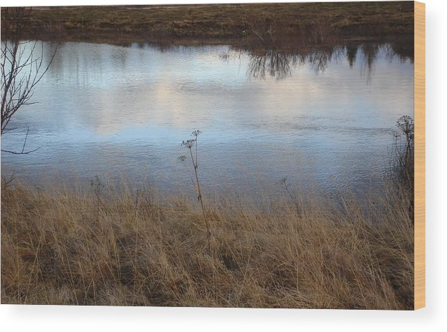 Nature Wood Print featuring the photograph Reflections by Marilynne Bull
