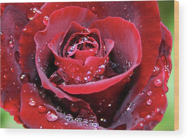 Rose Wood Print featuring the painting Rose by Yavor Kanchev