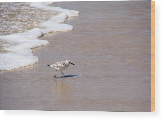 Nature Wood Print featuring the photograph Shorebird by Ty Nichols