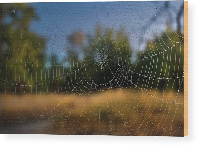 Cobweb Spiderweb Wood Print featuring the photograph Spiderpane Window by Kevin Felts