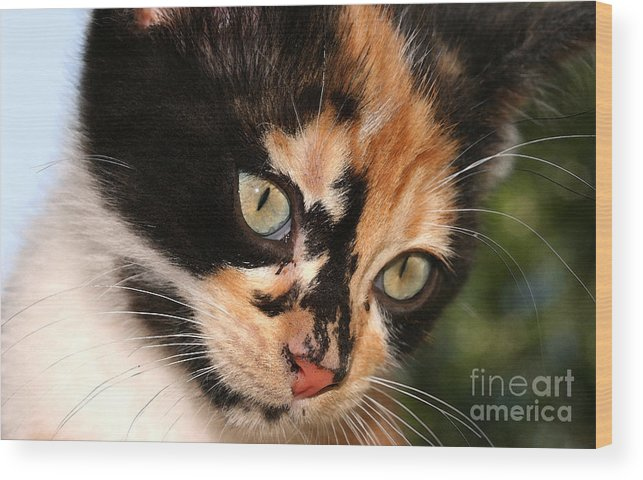 Cat Wood Print featuring the photograph Stray Kitten by Steve Augustin