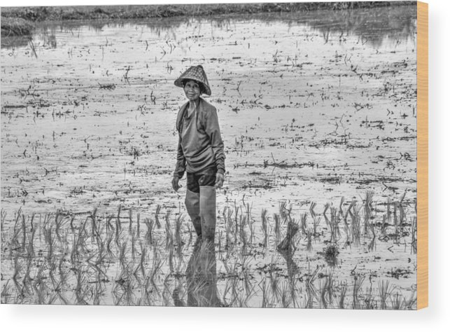 Thailand Wood Print featuring the photograph Thailand Rice Planter by James Zebrack