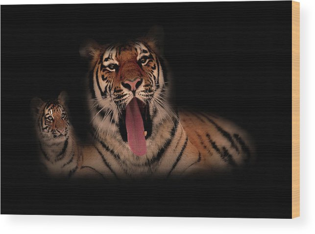 Tiger Wood Print featuring the photograph The Two Of Us by Phil Pace