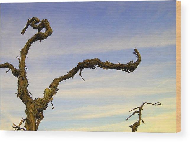 Grape Vines Wood Print featuring the photograph Vineland Series IIi by John Bartosik