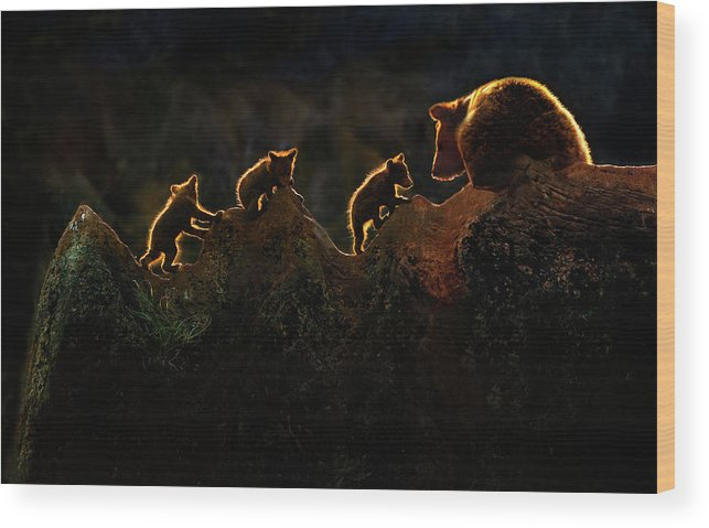 Backlight Wood Print featuring the photograph Time To Play by Xavier Ortega