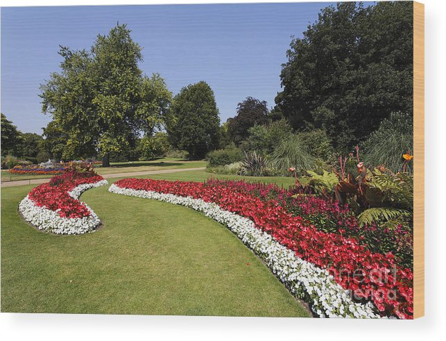 Flowerbed Wood Print featuring the photograph Colourful Flowerbeds In Hyde Park In London England by Robert Preston