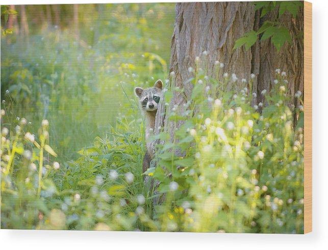 Peek-a-boo Wood Print featuring the photograph Peek A Boo by Carrie Ann Grippo-Pike