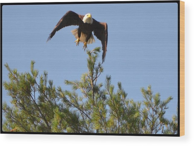 Eagle Wood Print featuring the photograph Airborne by Roger Rabiego