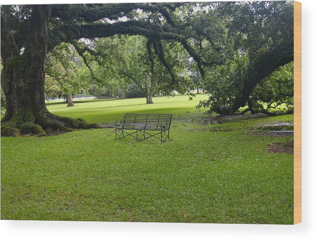 Tree Wood Print featuring the photograph Bench At Oak Alley Plantation by Denise Mazzocco