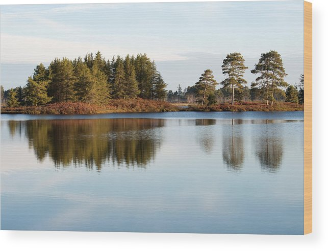 Wetland Wood Print featuring the photograph End Of Year by Linda Kerkau