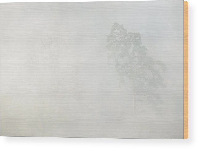 Fineart Wood Print featuring the photograph Ghost Tree by Andy-Kim Moeller