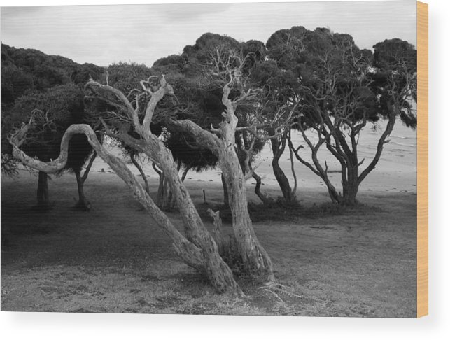 Beach Trees Wood Print featuring the photograph Hardy by Amanda Holmes Tzafrir