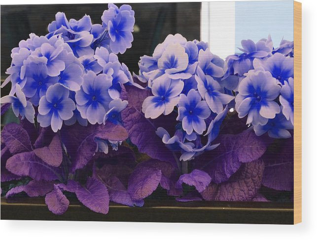 Park Wood Print featuring the photograph Indigo Flowers by Holly Blunkall