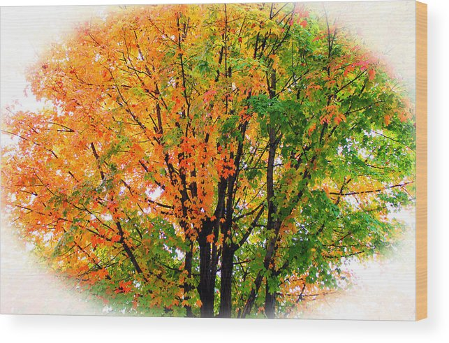 Tree Wood Print featuring the photograph Leaves Changing Colors by Cynthia Guinn