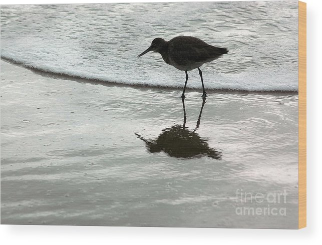 Beach Wood Print featuring the photograph Little Footsteps by Dan Holm