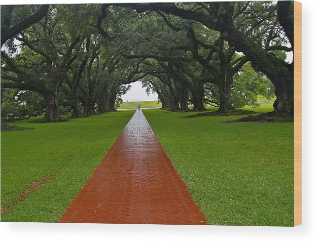 Tree Wood Print featuring the photograph Oak Alley Path by Denise Mazzocco