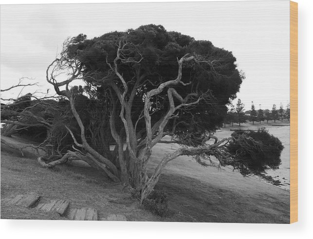 Beach Tree Wood Print featuring the photograph Sea Witch by Amanda Holmes Tzafrir