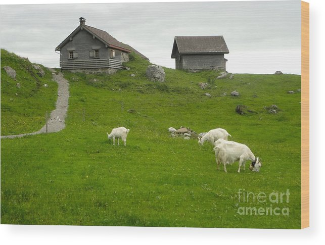 Switzerland Wood Print featuring the photograph Switzerland by Gregory Dyer