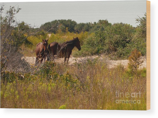 Nature Wood Print featuring the photograph Outer Banks Horses by Paulette B Wright