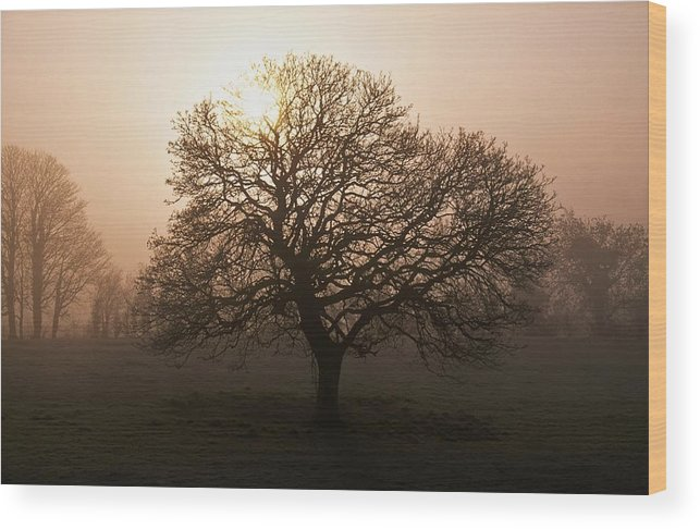 County Donegal Wood Print featuring the photograph Winter Tree On A Frosty Morning, County by Gareth McCormack